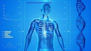 human skeleton 163715 640 300x169