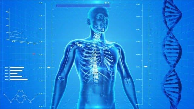 human skeleton 163715 640